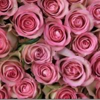 roses_small_thumb.jpg