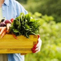 vegetables-2.jpg