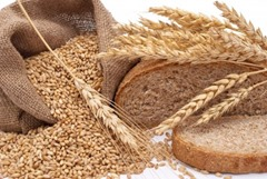 bread and wheat sabbatical year