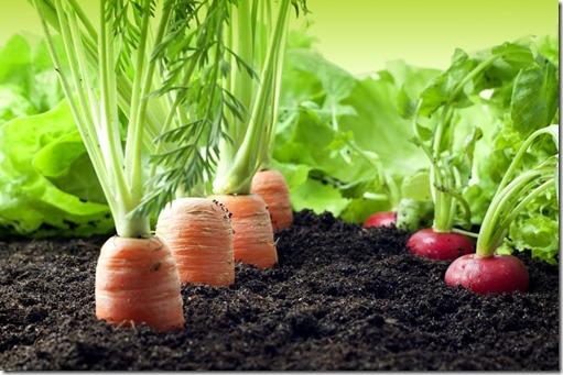 veggies_label
