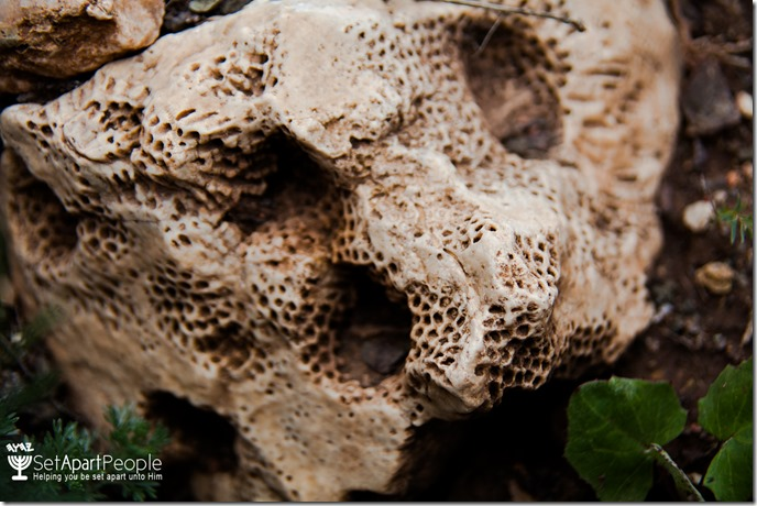 16.Fossilized Coral