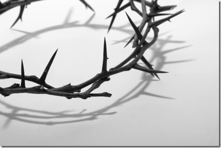 crown thorns_small