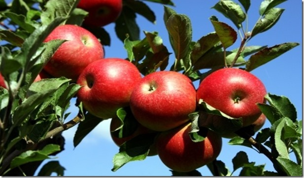 apples_small